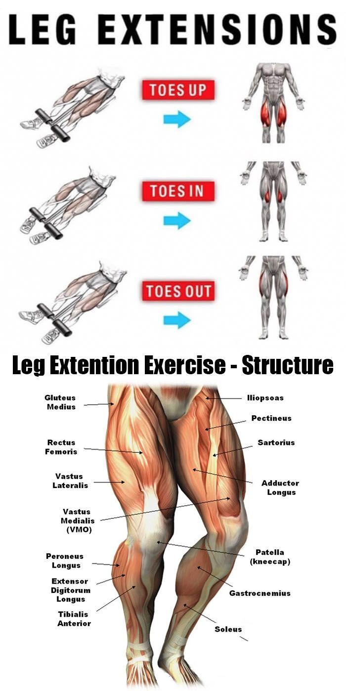 Muscles Of The Legs & Quads And Calves