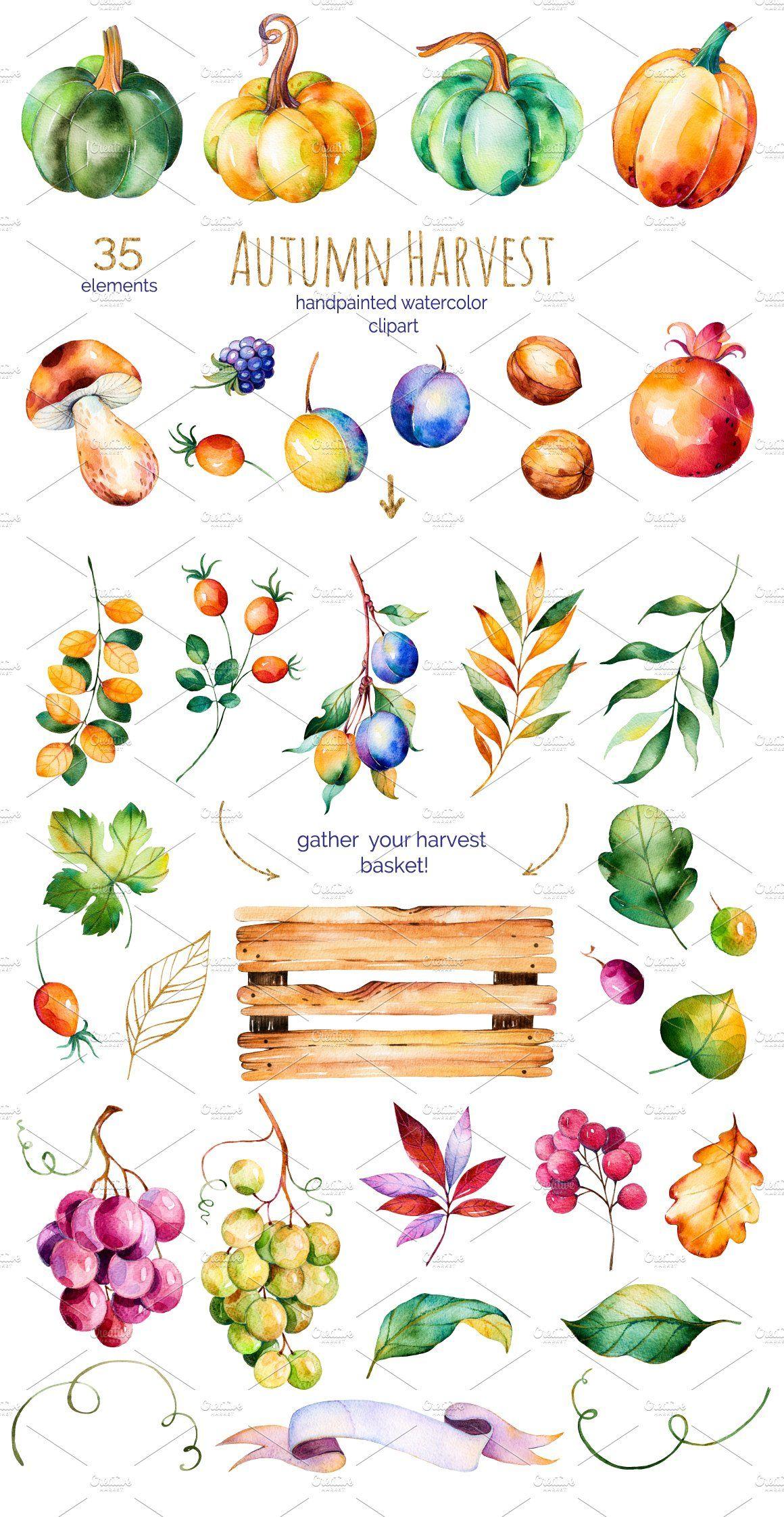 Autumn Harvest Fall Harvest Autumn Illustration Autumn Art