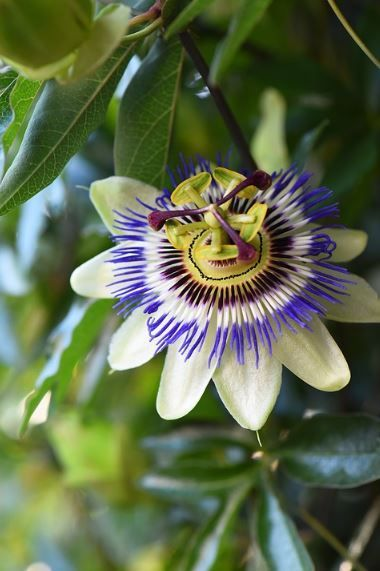 Top 35 Most Beautiful Flowers In The World √ Top 35 Most Beautiful Flowers In The World | A-Z | HD IMAGES » Jessica Paster√ Top 35 Most Beautiful Flowers In The World | A-Z | HD IMAGES » Jessica Paster
