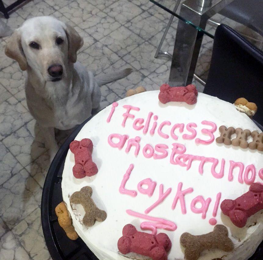 ¡Felices 3 años perrunos Layka! www.pastelesparaperros.com #LukasCakes
