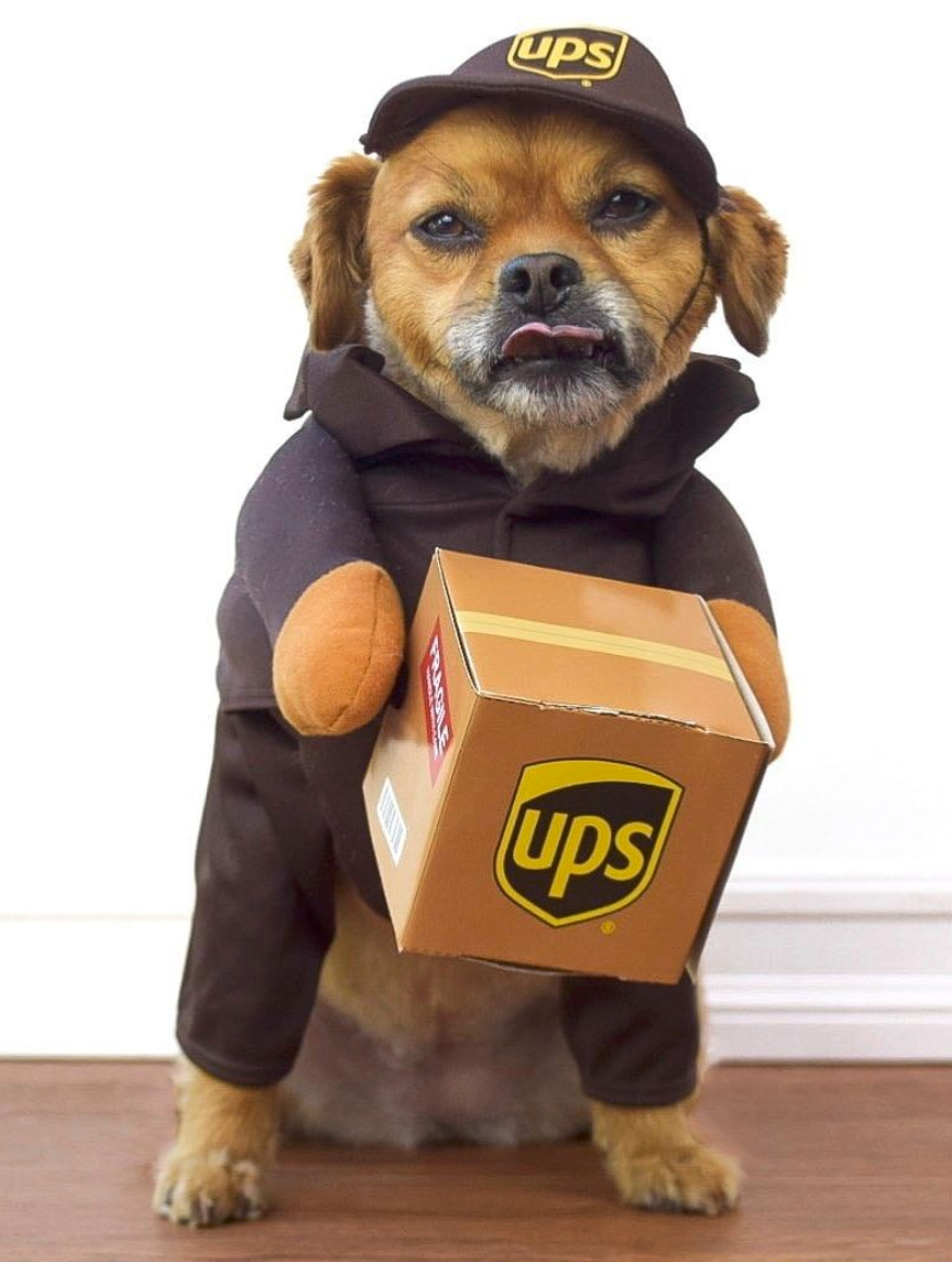 Ups Dog Costume In 2020 Pet Halloween Costumes Cute Baby Animals Dog Halloween Costumes
