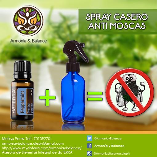 M s de 25 ideas incre bles sobre remedio contra las moscas - Remedio contra las moscas ...