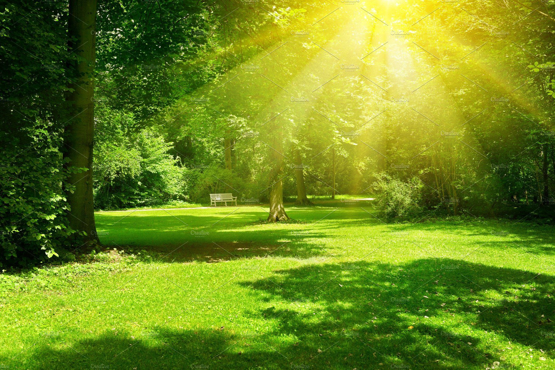 Bright Sunny Day In Park Anime Background Anime Backgrounds Wallpapers Scenery Background