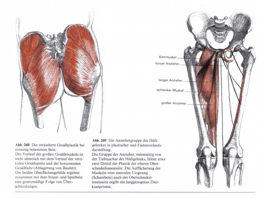 Tolle Hintere Brustwand Anatomie Fotos - Menschliche Anatomie Bilder ...