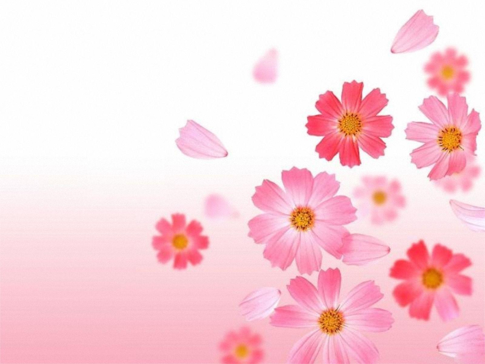 Imagenes De Fondo Flores Para Pantalla Hd 2: Fondos De Flores Gratis Para Fondo De Pantalla En 4K 11 HD