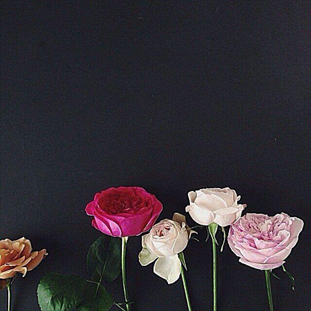 لرؤية التصميم على الخلفية يوجد في حساب ملاحظة نستخدم في التصميم برنامج الفوتوشوب على ا Flower Backgrounds Iphone Wallpaper Images Iphone Wallpaper Fall