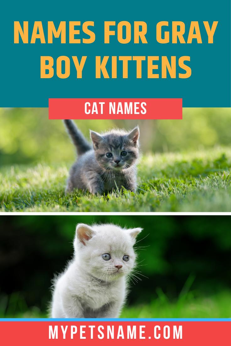 Boy Gray Cat Names In 2020 Grey Cat Names Cute Cat Names Grey Tabby Cats