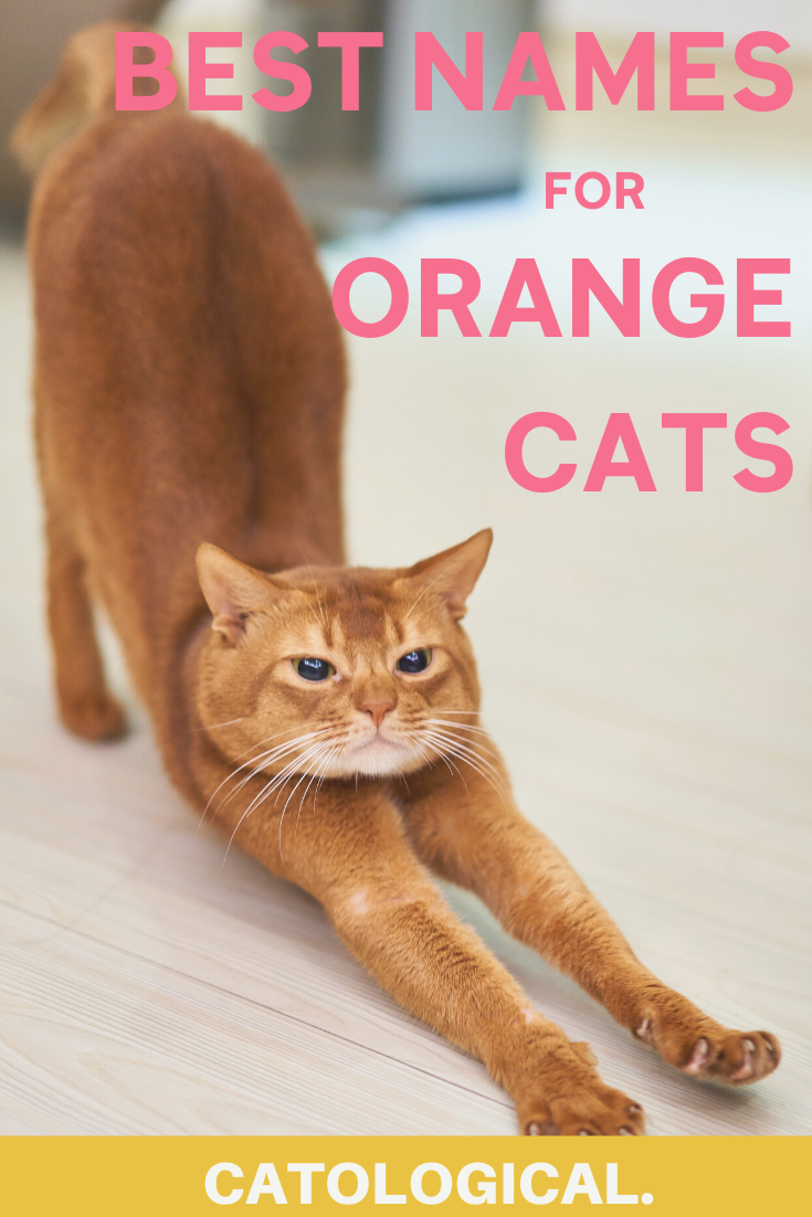 Top 200 Names For Orange Cats Funny Traditional Unique And More In 2020 Orange Cats Cute Cat Names Girl Cat Names