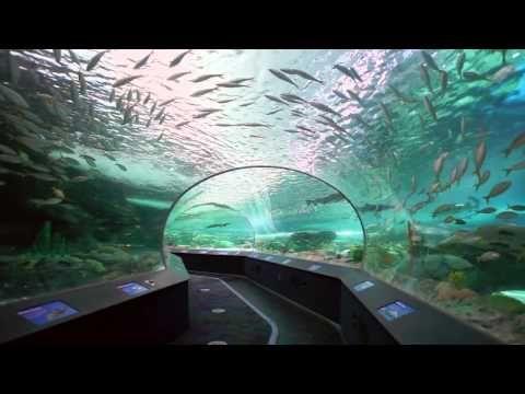 Ripley S Aquarium Of Canada Ripley Aquarium Ripleys Aquarium Toronto Aquarium