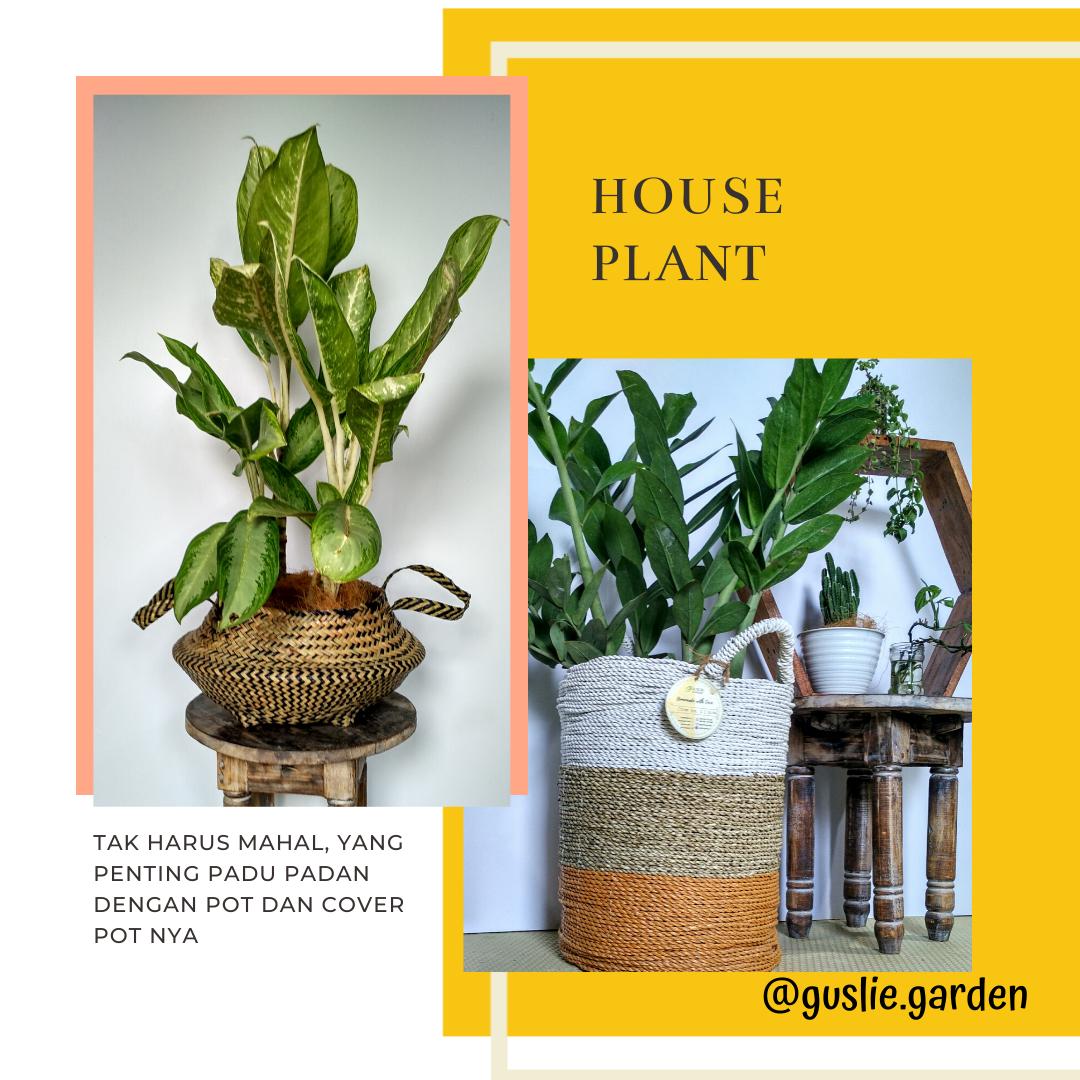 House Plant House Plants Plants House
