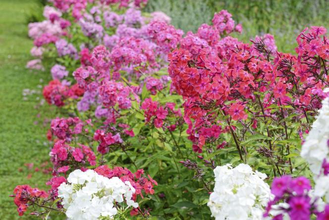 Kwiaty Lata Jakie Popularne Byliny Kwitna Latem Murator Pl Plants