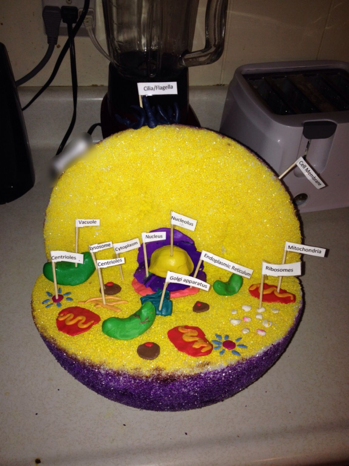 3d plant cell model project materials - 3d Plant Cell Model