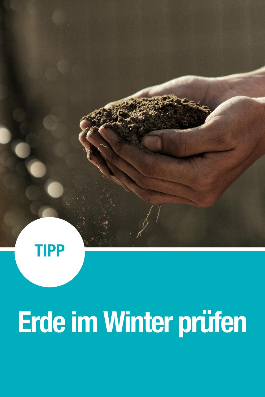 Regeneration Der Erde Im Winter Winter Garten Gartentipps