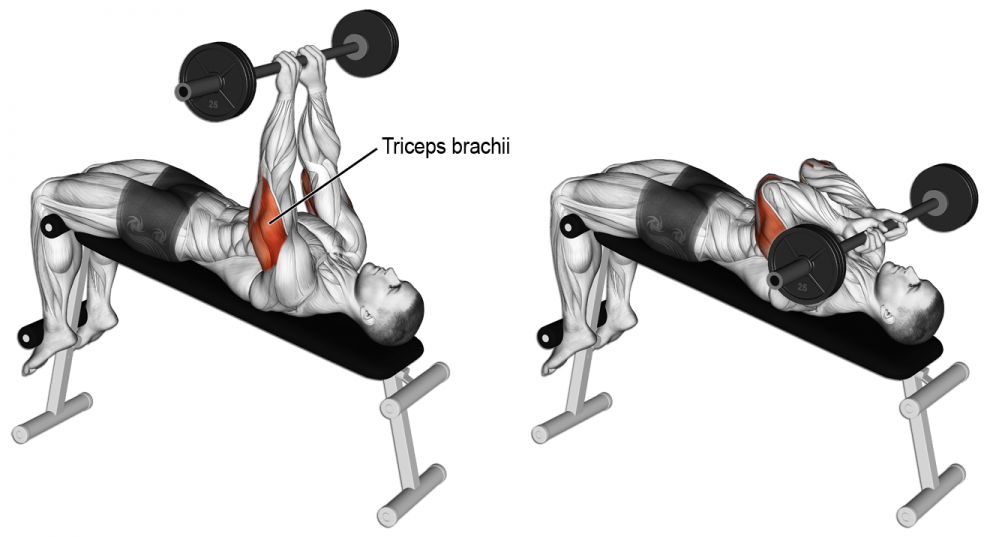 Comme Effectuer Barre Au Front Triceps Anatomie