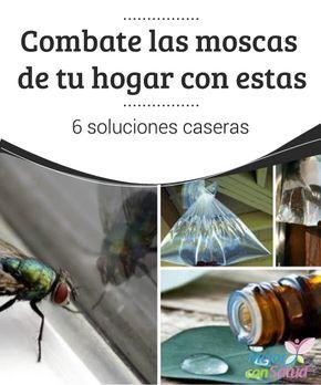 Combate las moscas de tu #Hogar con estas 6 soluciones caseras   ¿Las moscas están invadiendo tu hogar? Te damos 7 soluciones para combatirlas sin utilizar productos #QuímicosAgresivos. ¡Apunta! #Curiosidades