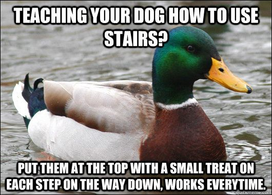 Very useful to new dog owners.