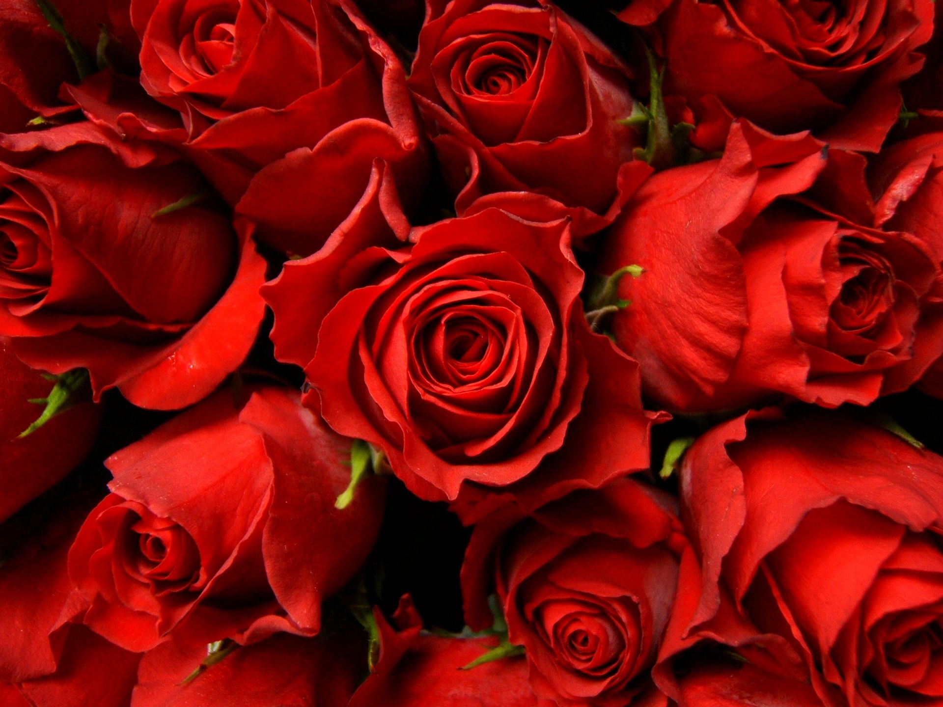 Red Roses Picture - Wallpaper, High Definition, High Quality | Bank ...