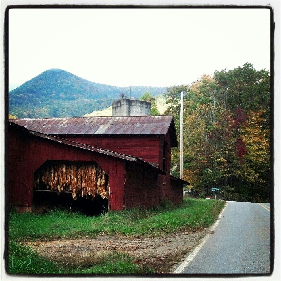 Tobacco hanging in barn NC Country barns, History of