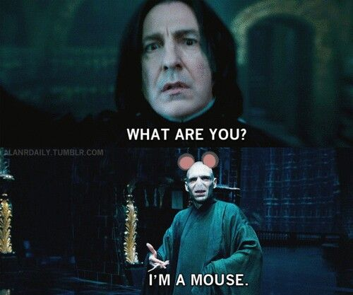 Voldemort's halloween costume is a mouse. Lol | Harry potter memes, Harry  potter vs twilight, Harry potter puns