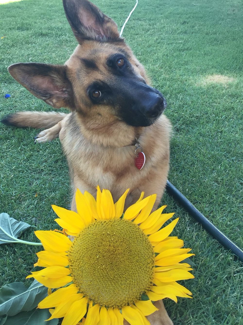 Vada Picks Her Favorite Flower With Images Beautiful
