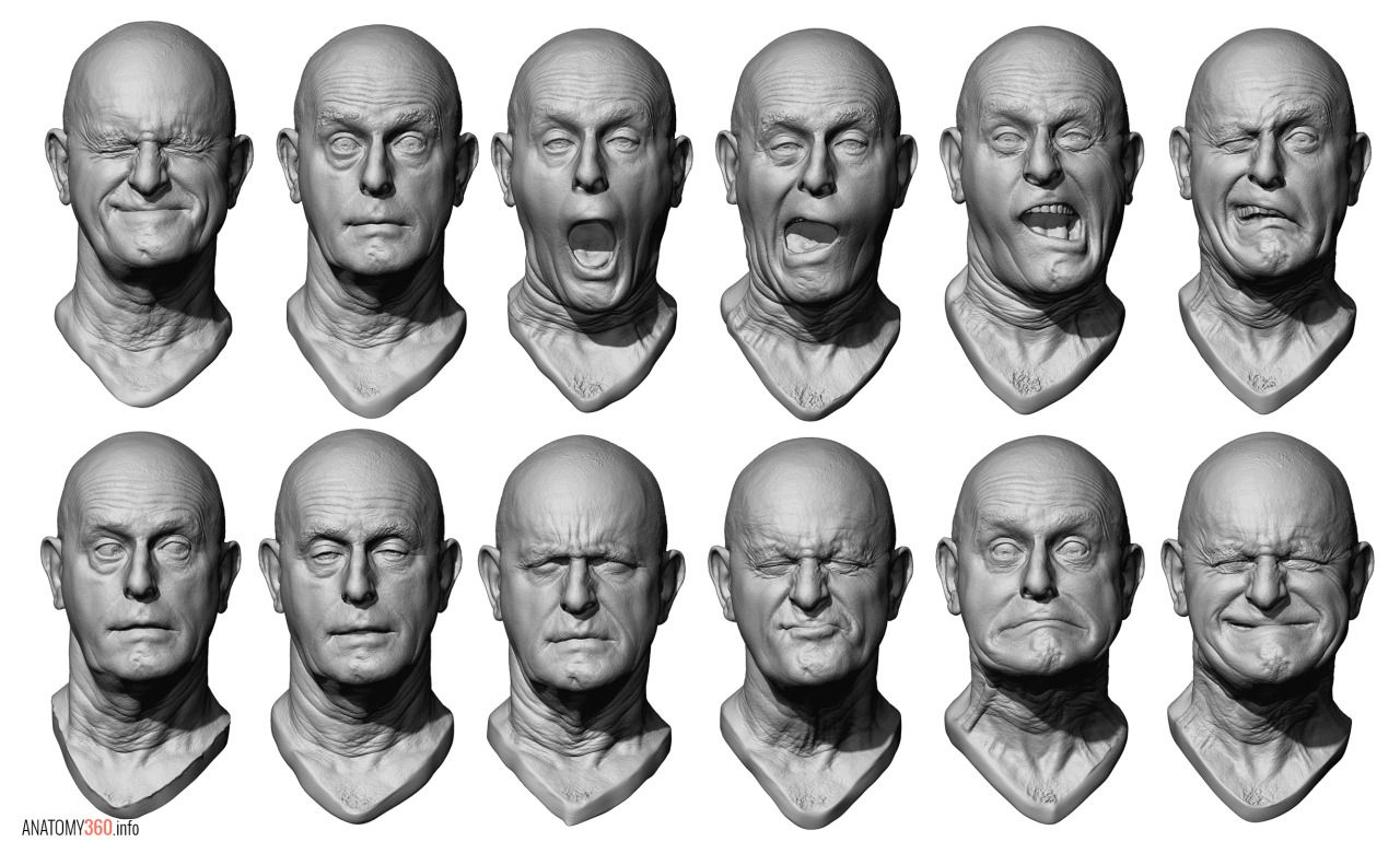 Anatomy 360 : Photo   Facial Shapes and Expressions   Face