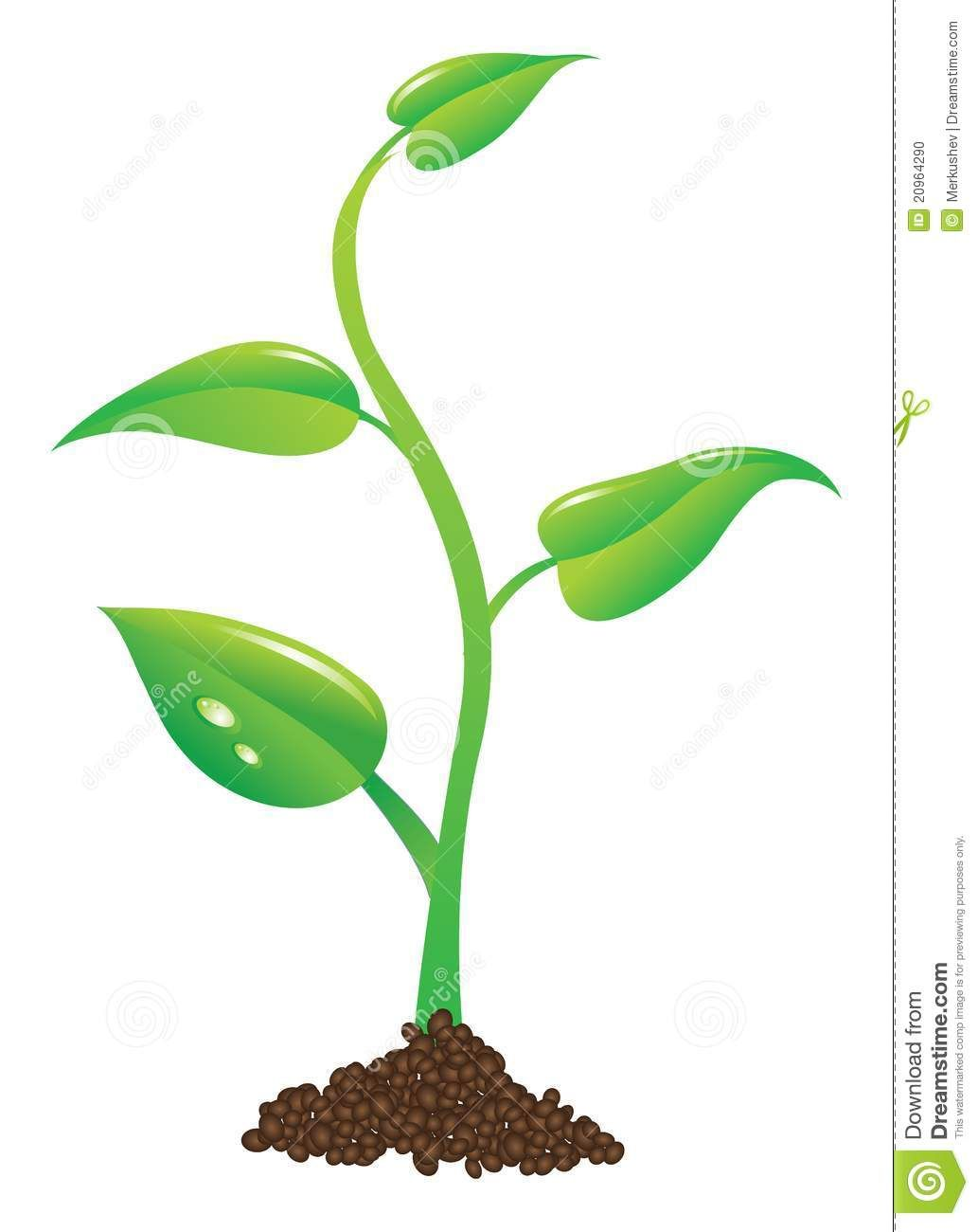 medium resolution of plant sprout clipart google search