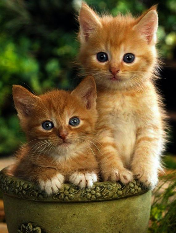 I M Too Cute For My Bow Tie Kittens Cutest Baby Cats Cute Cats