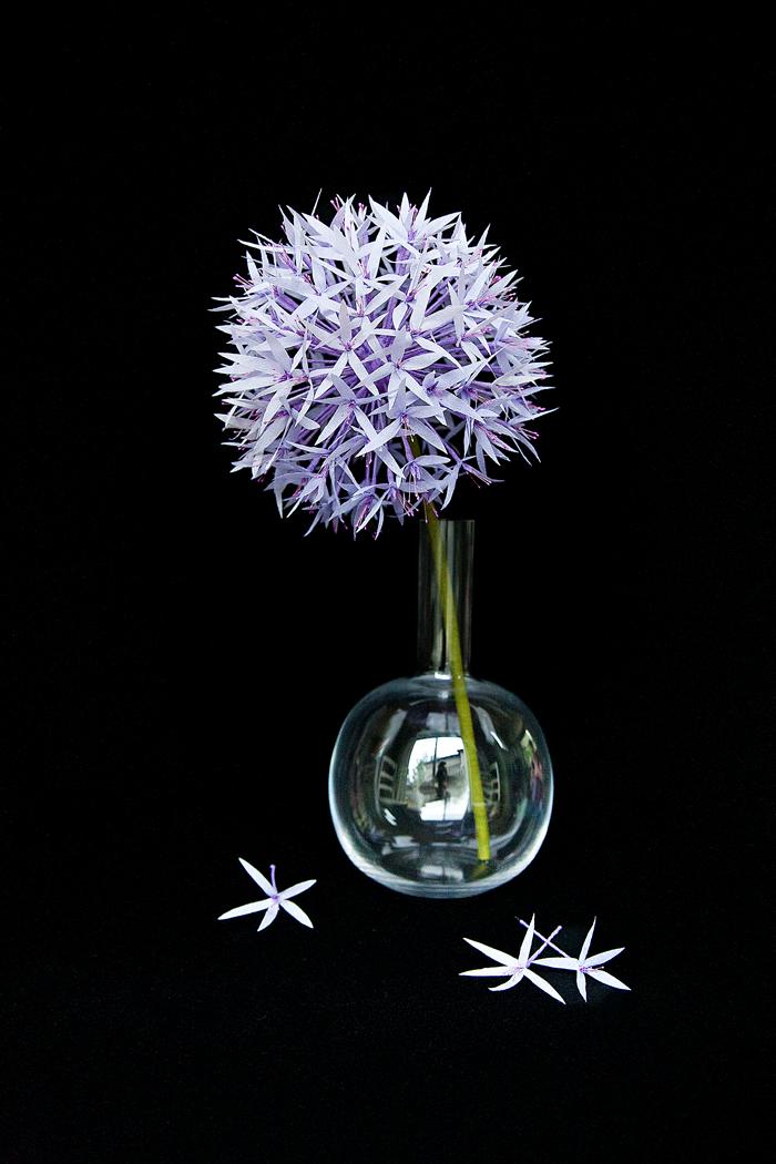 DIY Paper Allium Project by Kate Alarcon for Design*Sponge
