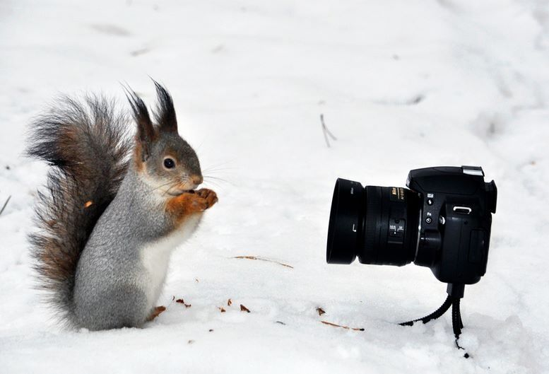 Say cheese? Animals, Cute animals, Squirrel