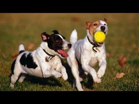Dog Can Play Better Than Men Viral Videos In Kerala With