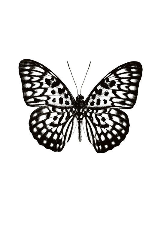 Tatuajes Mariposas Blanco Y Negro