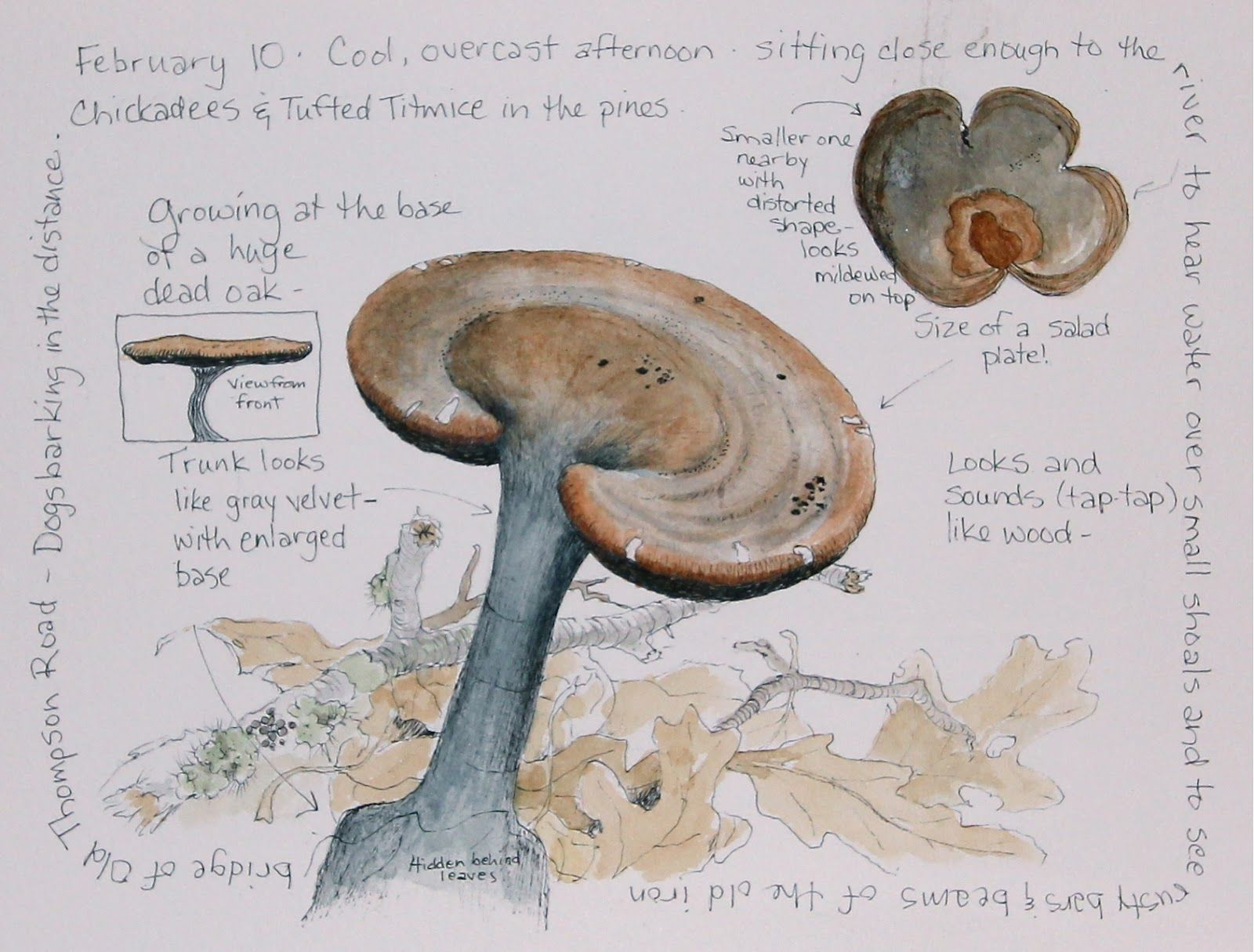 Middlewood Journal: Unknown Stalked Fungus