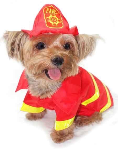 FIREFIGHTER DOG 6957dd6b4