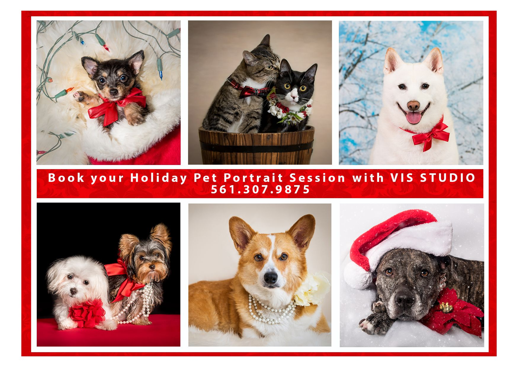 For The Ultimate Portraits Of Your Pets Visit To Vasi Studio With