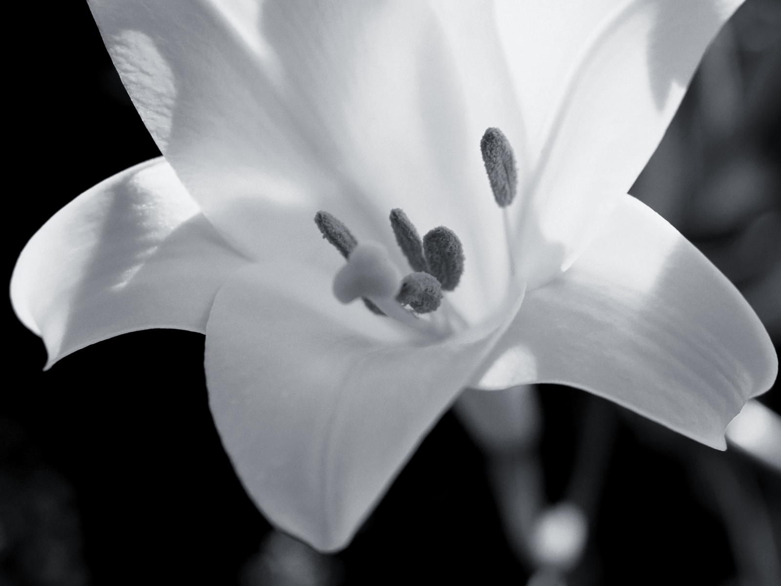 find this pin and more on black and white photography and art - Black And White Flowers
