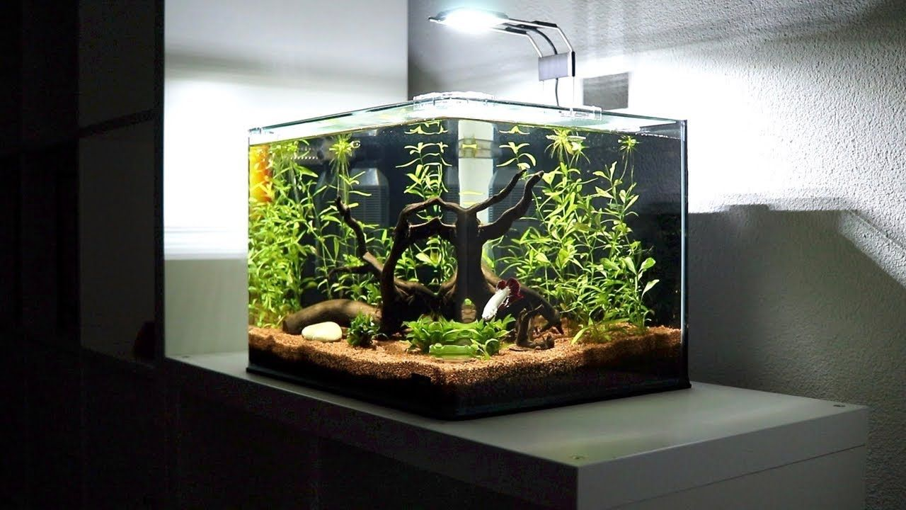 How To Get Scratches Out Of A Fish Tank