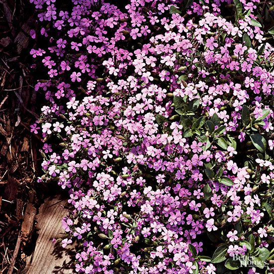 Low-Maintenance Perennials For The Northeast