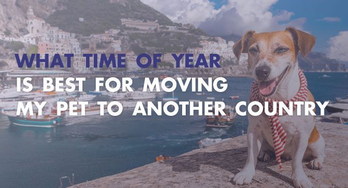 What Time Of Year Is Best For Moving My Pet To Another Country Pet Travel Pets Pet Friendly Hotels