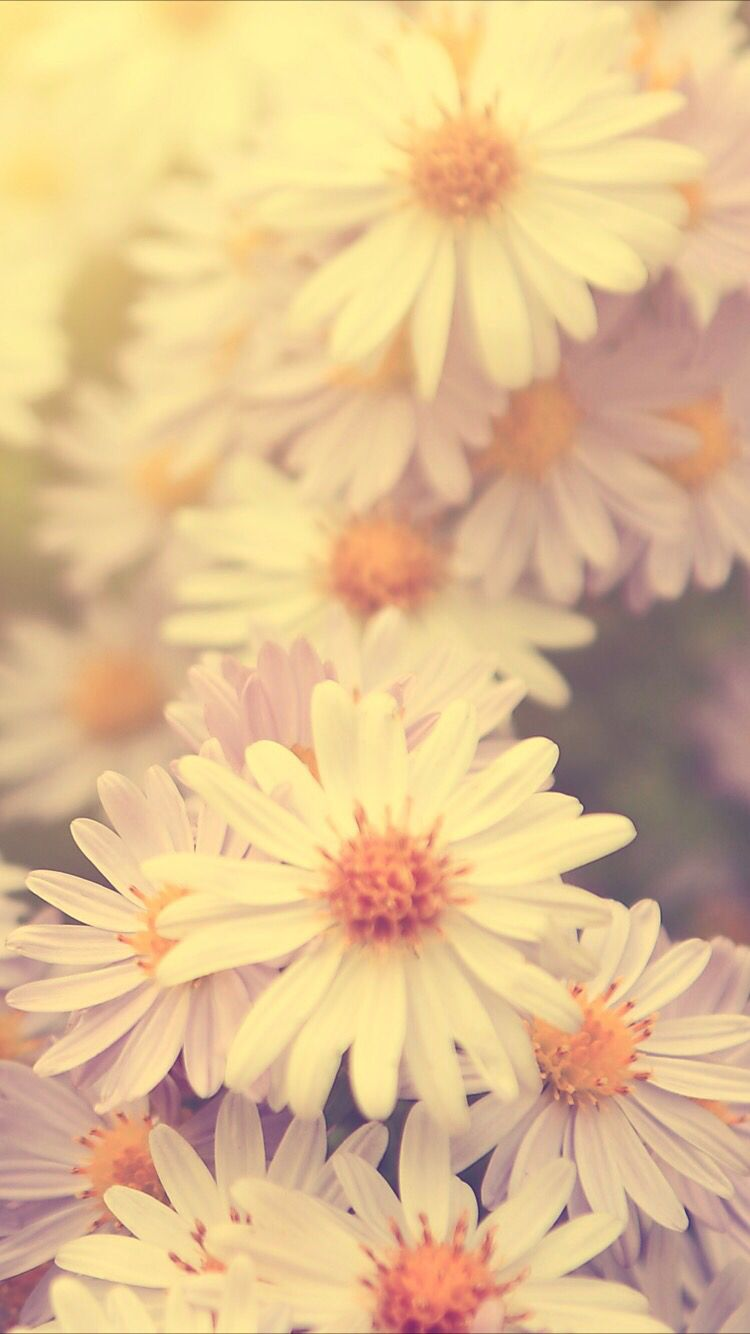 Sunny Daisies Background Daisy Wallpaper Flower Background Iphone Pretty Wallpaper Iphone