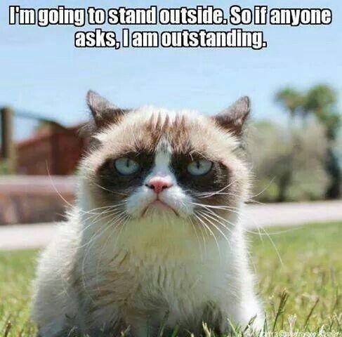 Ha ha ha - Grumpy cat