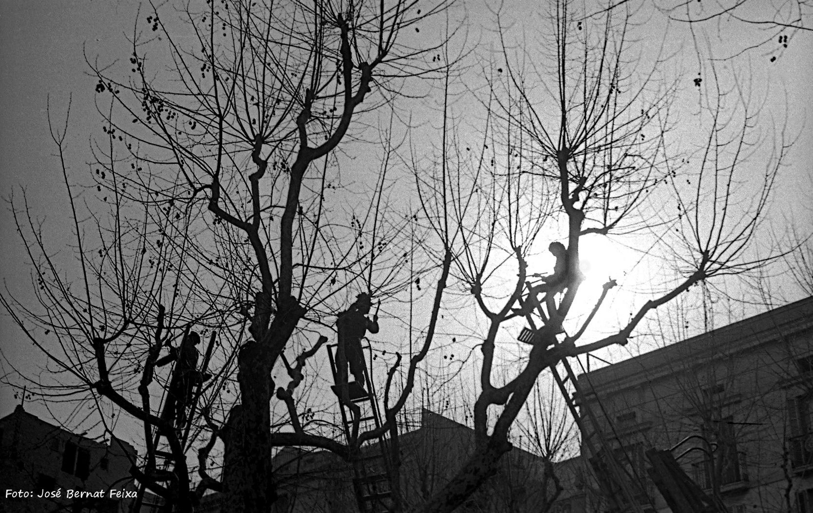Bomen snoeien in tegenlicht
