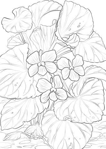 Wood Violets Coloring Page Dibujos En Tela Paginas Para