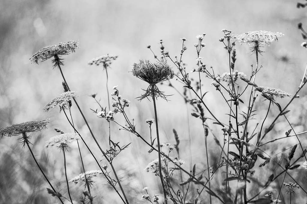 Summer Wildflowers Black And White Landscape Photograph