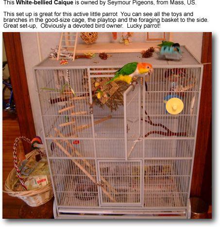 Fun Bird Playgrounds Parrot Pet Parrot Parrot Cage