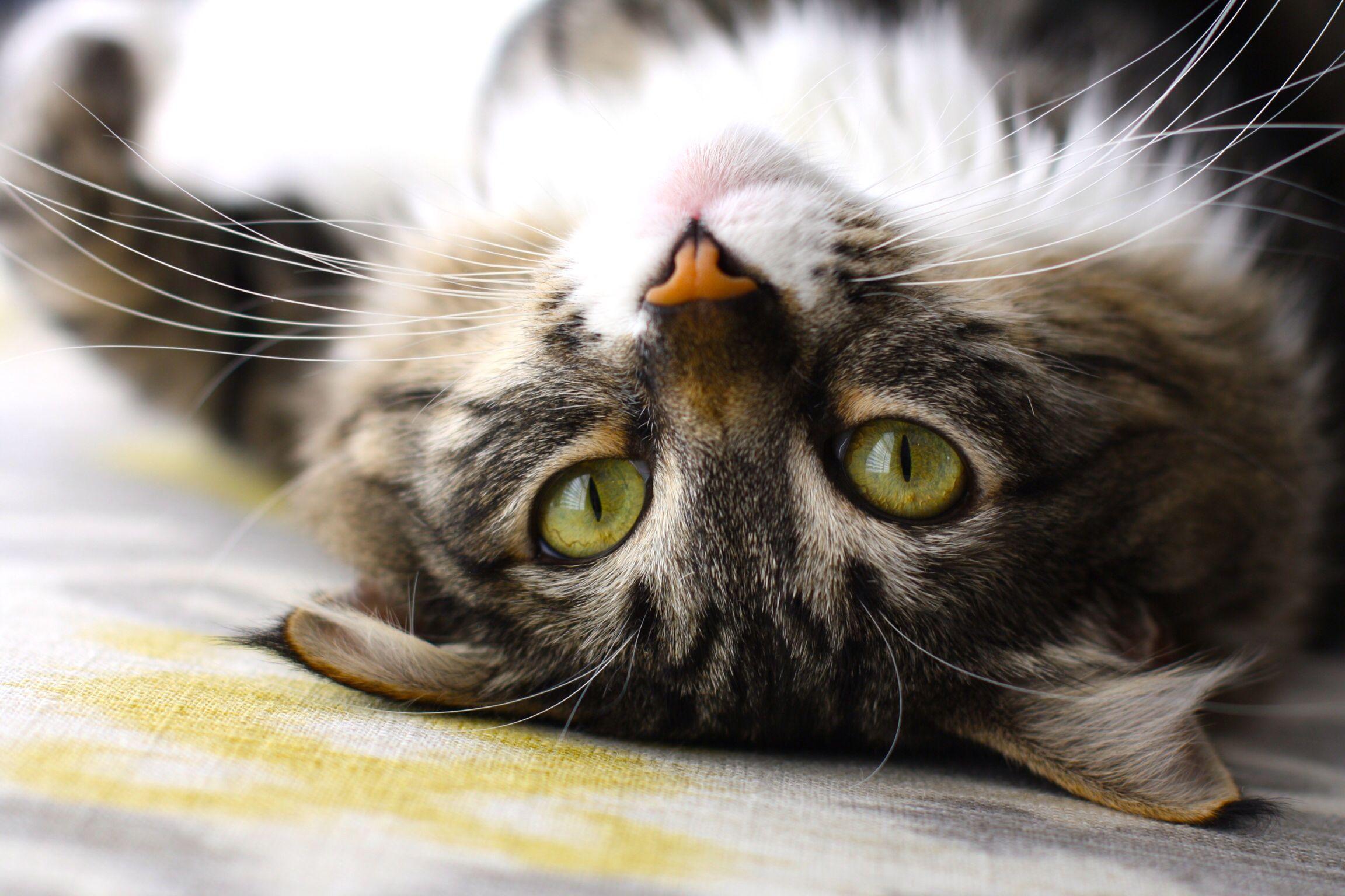 Kit Kat With Images Kit Kat Kitty Kat