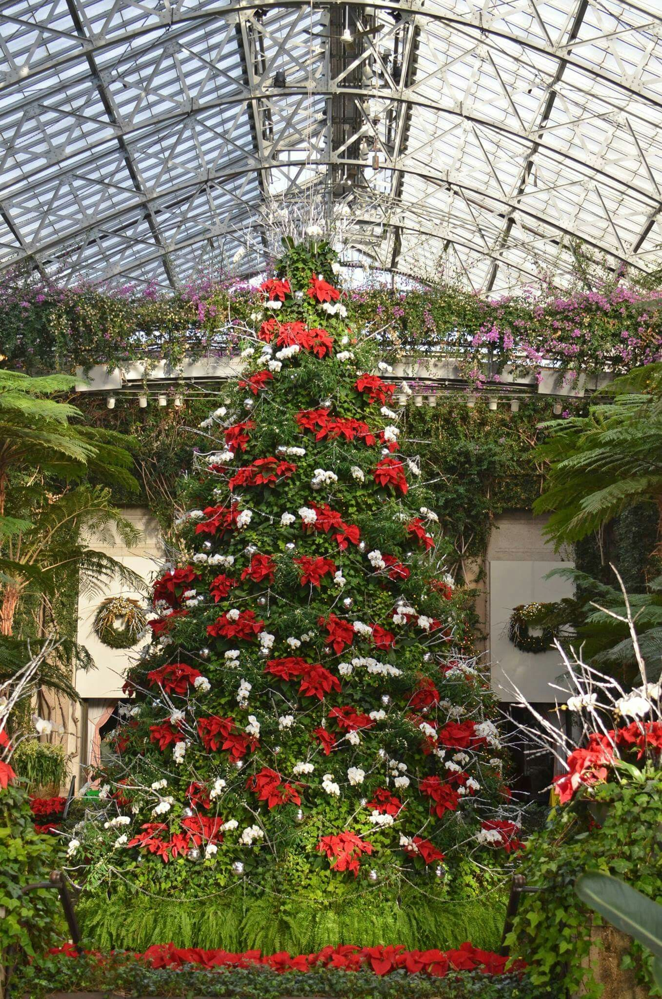 Longwood Gardens tree made of individual Poinsettia plants and white ...
