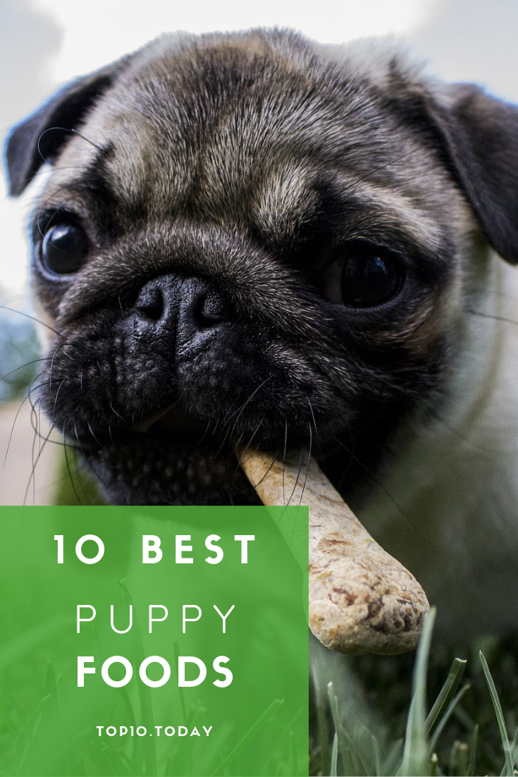 Find The Best Puppy Food For Your Pupper Puppy Food Best Puppy Food Best Puppies