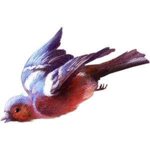 TurningLeafApothecary_LorieD_cc_chaffinch1a.png