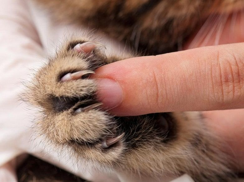 Best Pet Nail Grinder For Cat And Dog Buyer's Guide