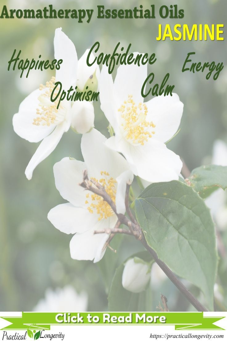 Aromatherapy jasmine essential oils benefits aromatherapy uses aromatherapy jasmine essential oils benefits aromatherapy uses jasmine has been known to ease depression and izmirmasajfo